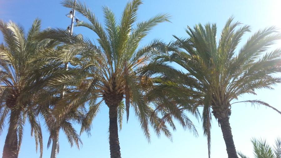 Piilokuba by Galaxy3: Ei ikinä uskoisi koska ei näe, mutta palmussa on papukaijoja.