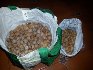 Mies oli kerännyt manteleita ja pähkinöitä.